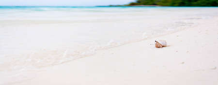 quite time: Maldives are full of hermit crabs on the beach which get scared quite easy but if you stay still they come out and start crawling  They are really funny dragging the big seashell behind them  I took my time layed on the floor and waited for the perfect sh Stock Photo