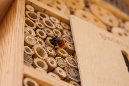Close up of a wild bee building its home in spring in a wooden bee hotel hanging on the outside wall of a house. Insect house is a manmade structure created to provide shelter for insects. Standard-Bild