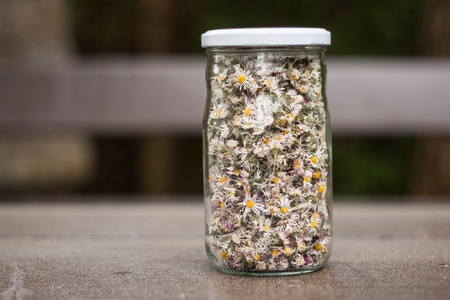 Dry daisy flowers in a glass jar on a dark wooden table. Dried Bellis perennis flower heads used as medicine, in tea form, as herbal remedy for the common cold, bronchitis and inflammations. Standard-Bild