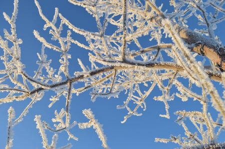 winter frost on tree branches Imagens