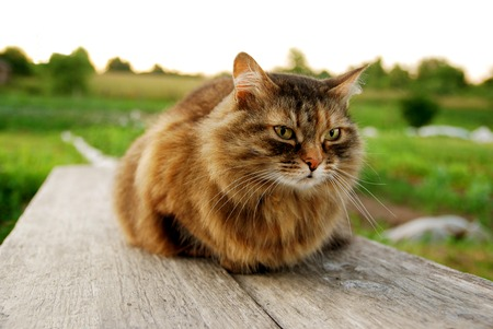 Cat Lying on a Bench at the Grass Village Background Stock Photo