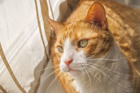 Red cat in a sunny day on window background Imagens