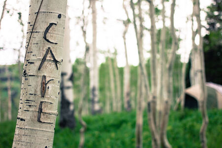 bark carving: Care carved into Aspen tree