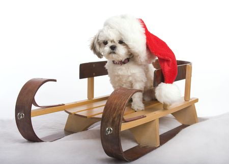 Shih Tzu puppy sitting on a sled with a santa claus hat on photo