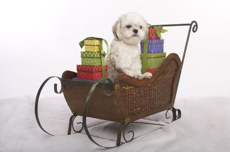 Shih zhu puppy amid piles of presents on a minature Christmas sleigh photo