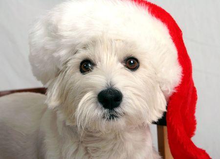Ho, ho, ho Stock Photo