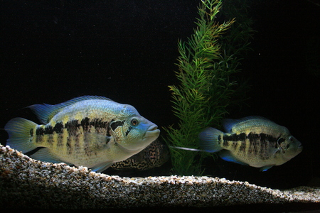 Fish living in the seashore and oceans