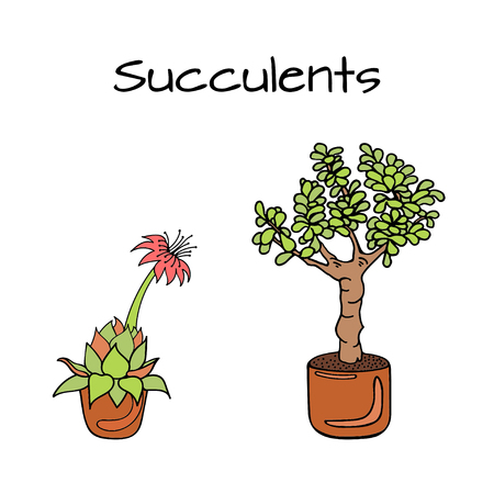 Illustration of most popular succulents. Hens-and-Chicks plant, Jade Plant. Isolated on white background.