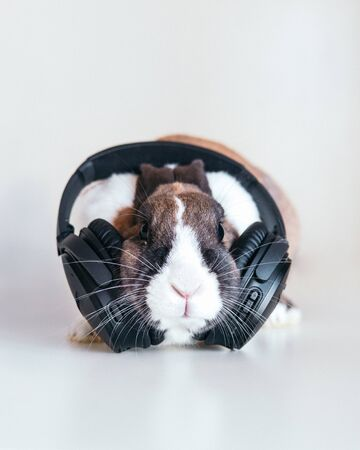 rabbit with headphones