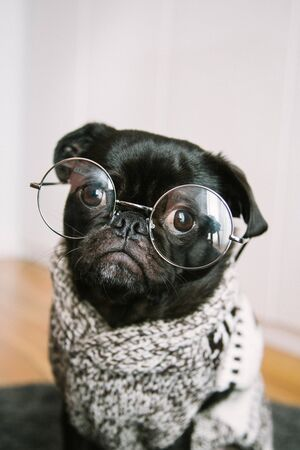 dog with glasses Banco de Imagens