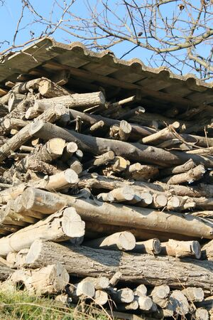 woodpile photo