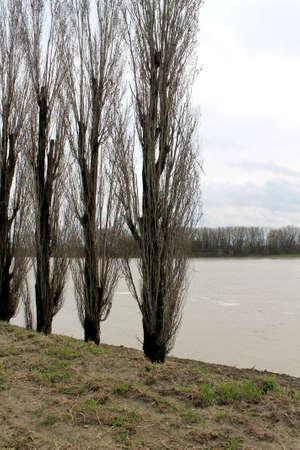 trees on coast river photo