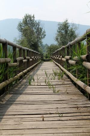 wooden bridge on the lake photo