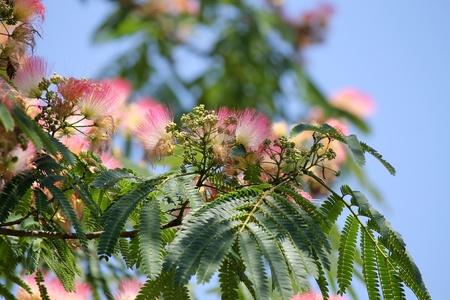 flowering plant: fioritura delle piante Archivio Fotografico