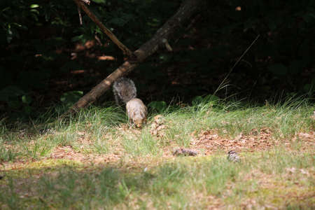 squirrel in the forest photo