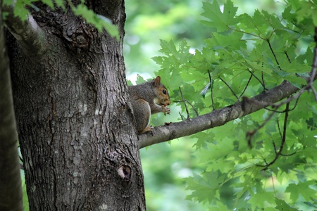 squirrel on the tree photo