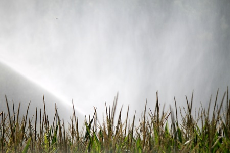 irrigation in the fields photo