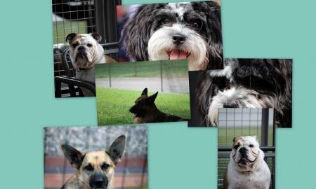 collage of animals photo