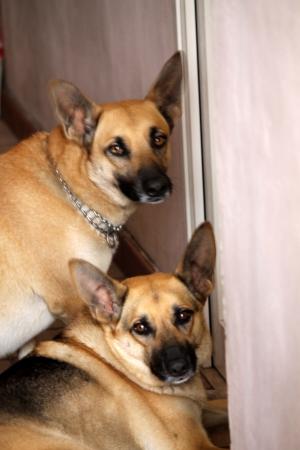 tiny terrier dog photo