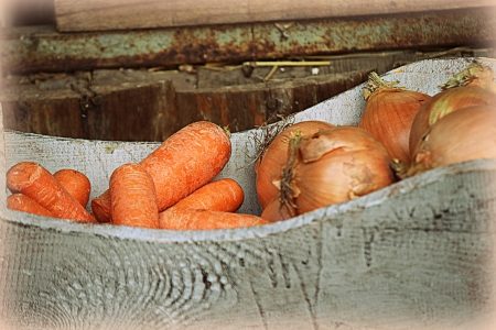 carrots and onions photo