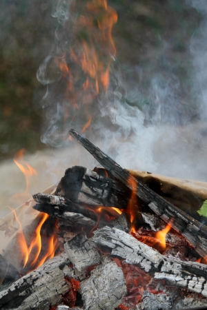 Fire in the forest photo