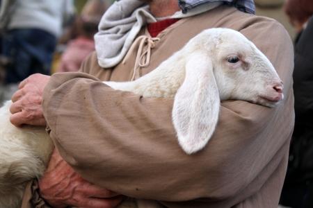 lamb with shepherd Stock Photo