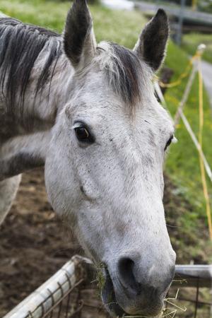 horse in the farm photo