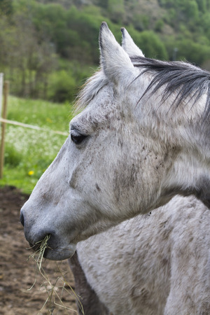 horse in the farm photo