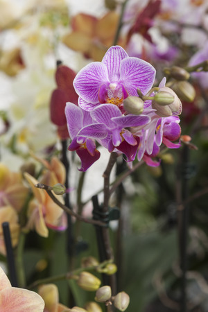 orchid in bloom photo