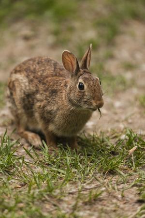 Kaninchen Standard-Bild - 29155425