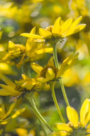 yellow flower in spring photo