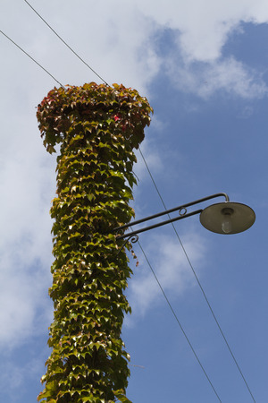 lamppost wrapped in ivy photo