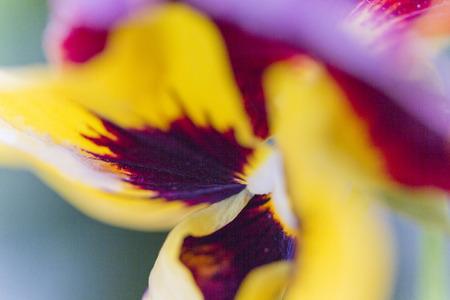 violet in the garden photo