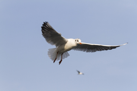 seagull fly on lake photo