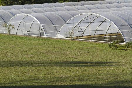 greenhouse in the farm photo