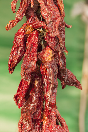 dried red chili photo