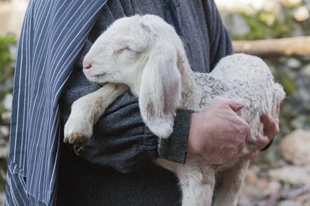 lamb with shepherd Archivio Fotografico