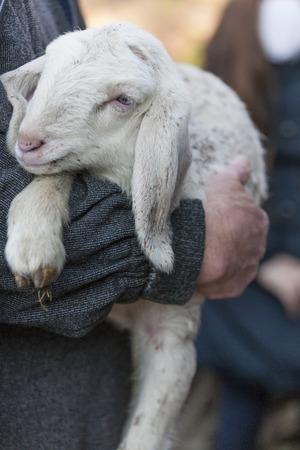 lamb with shepherd Banco de Imagens