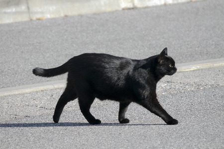 black cat walking in the street Stock Photo