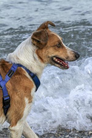 dog at lake Stock Photo