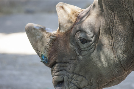cat s: rhino at the zoo