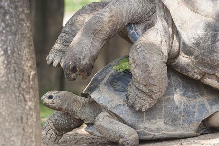 mate: turtles mate