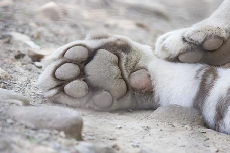 tiger paw photo