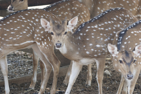 fawn in the woods photo
