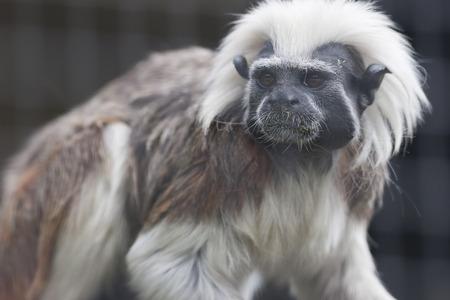 gibbon in the jungle photo