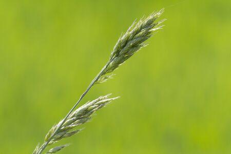 mala suerte: mala suerte en el prado