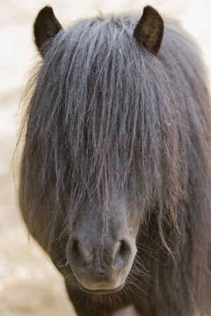 quadruped: horse pony  in the farm