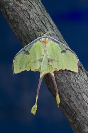moth: moth in the night