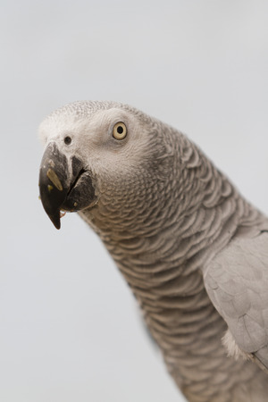 perch: parrot on perch
