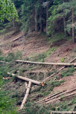 deforestacion: la deforestación en la montaña